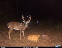 deer-04