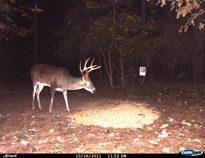 deer-07